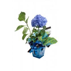 Hortência Azul Especial