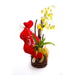 Orquídea Você é Especial