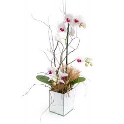 Orquídea Love You