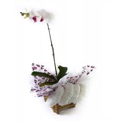 Orquídea Encanto